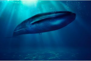 Blue-Whale-Fac