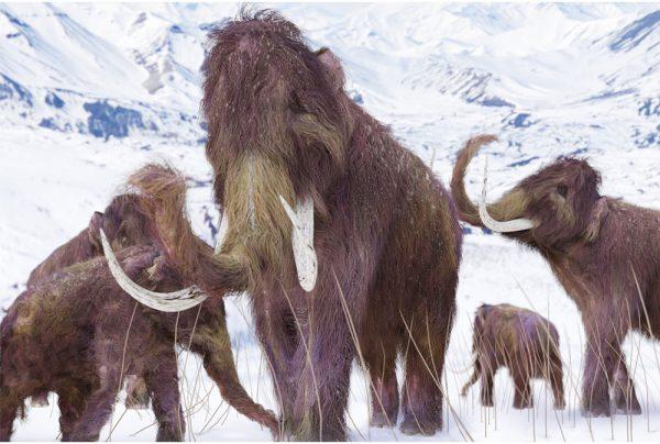 WoollyMammoth