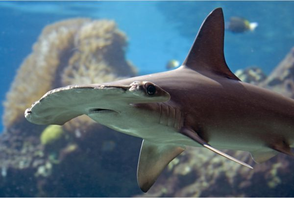 Image result for sharks being cute