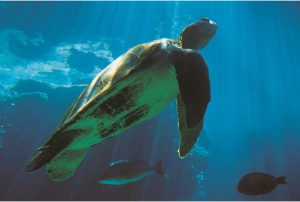 sea-turtle-