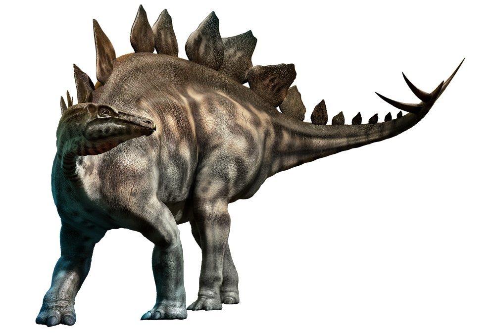 Stegosaurus-1486-xl